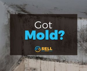 Have Mold behind wall Broken Arrow